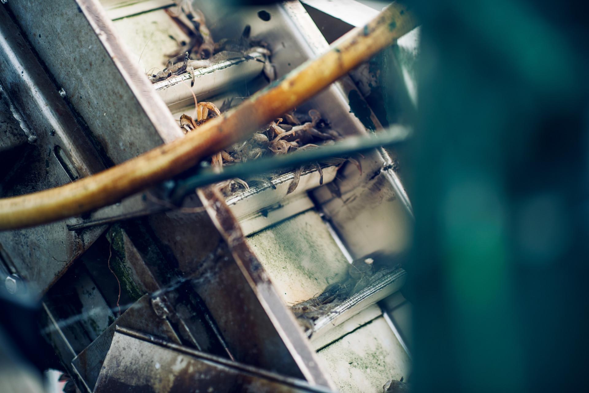 bernstein postproduction shrimpers